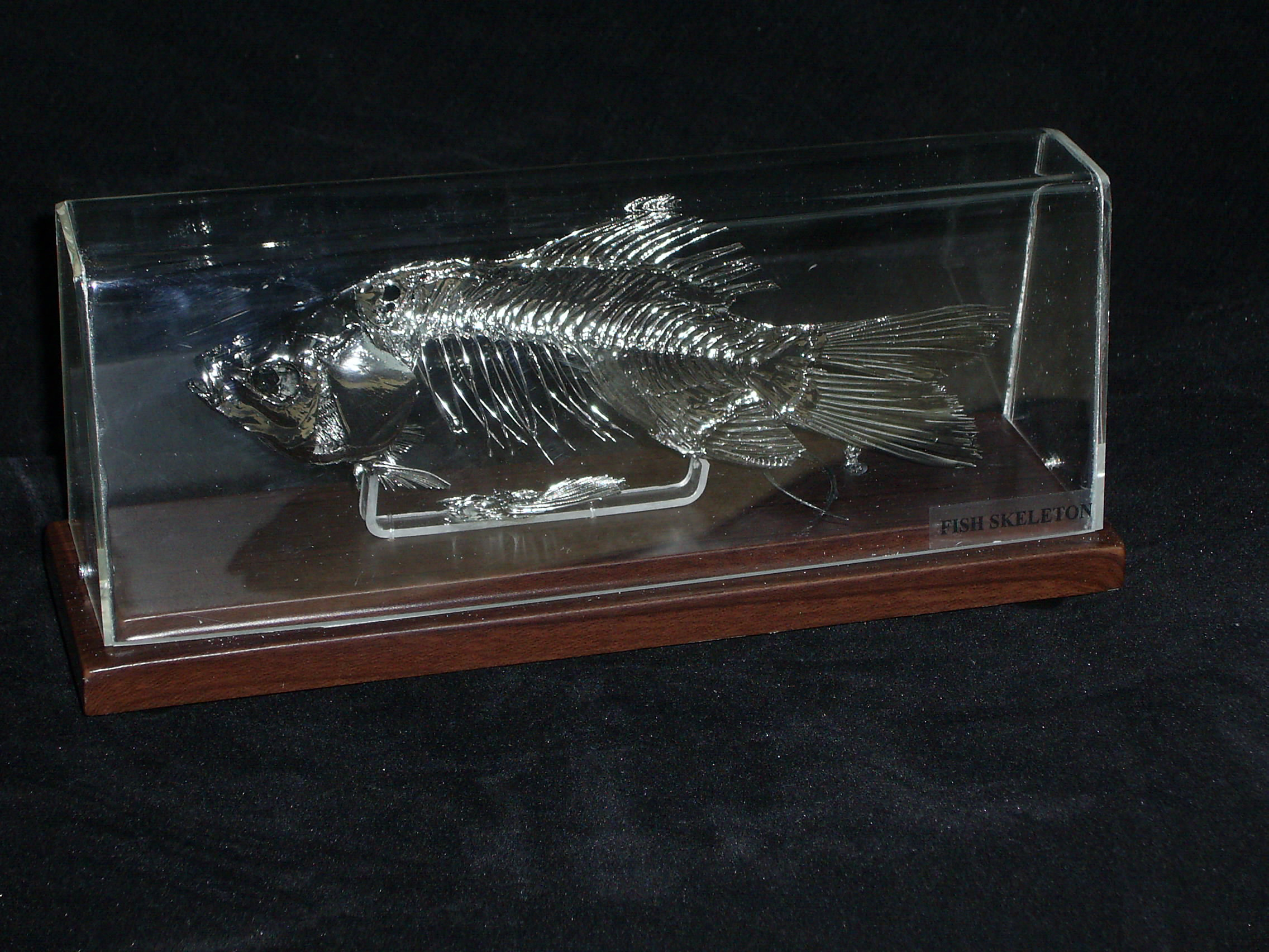 Decorative Fish Painted With Chrome Paint